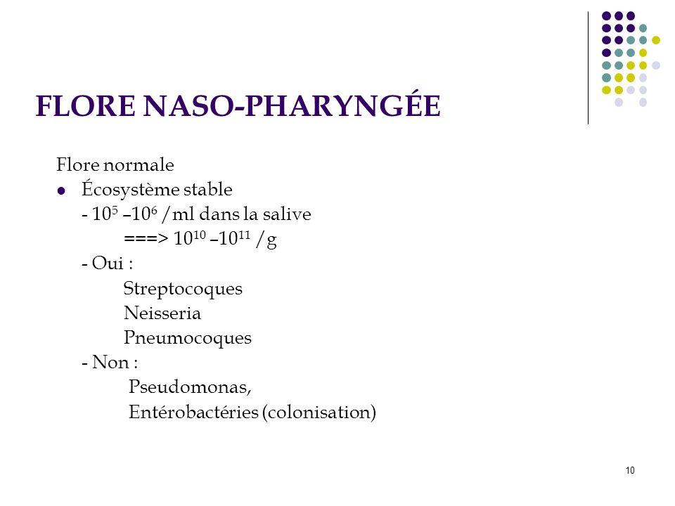 10 Flore normale Écosystème stable - 10 5 –10 6 /ml dans la salive ===> 10 10 –10 11 /g - Oui : Streptocoques Neisseria Pneumocoques - Non : Pseudomon