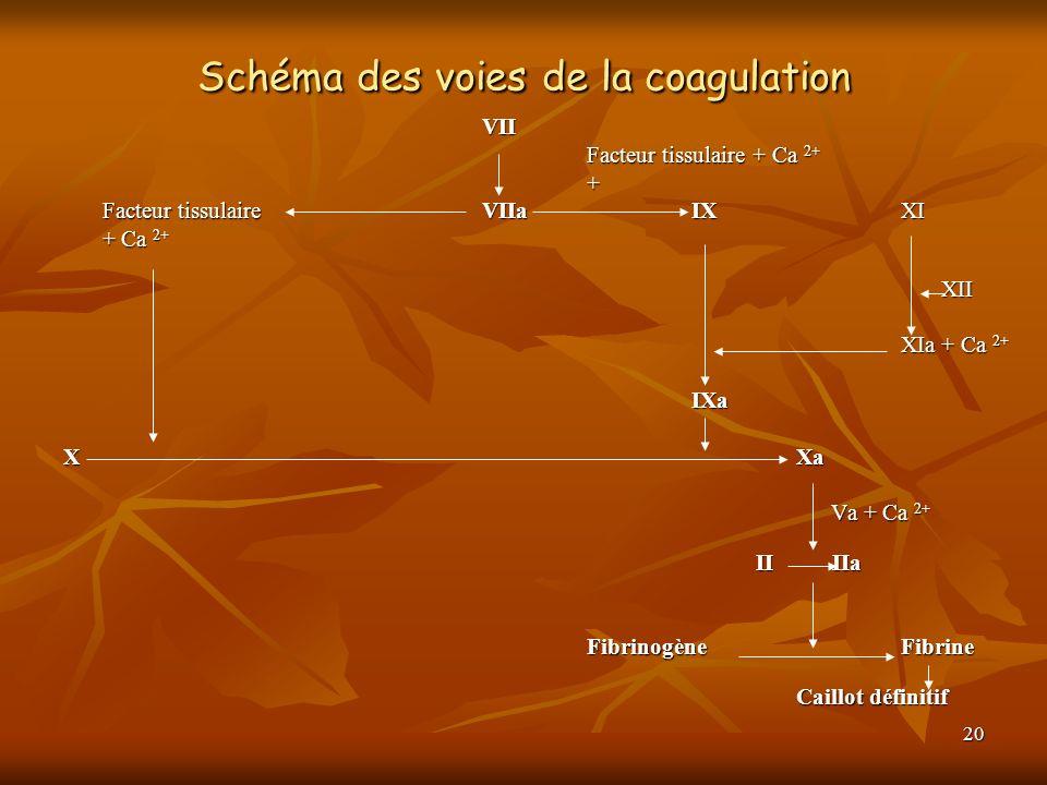 20 Schéma des voies de la coagulation VII Facteur tissulaire + Ca 2+ + Facteur tissulaire VIIaIXXI + Ca 2+ XII XII XIa + Ca 2+ IXa XXa Va + Ca 2+ Va +