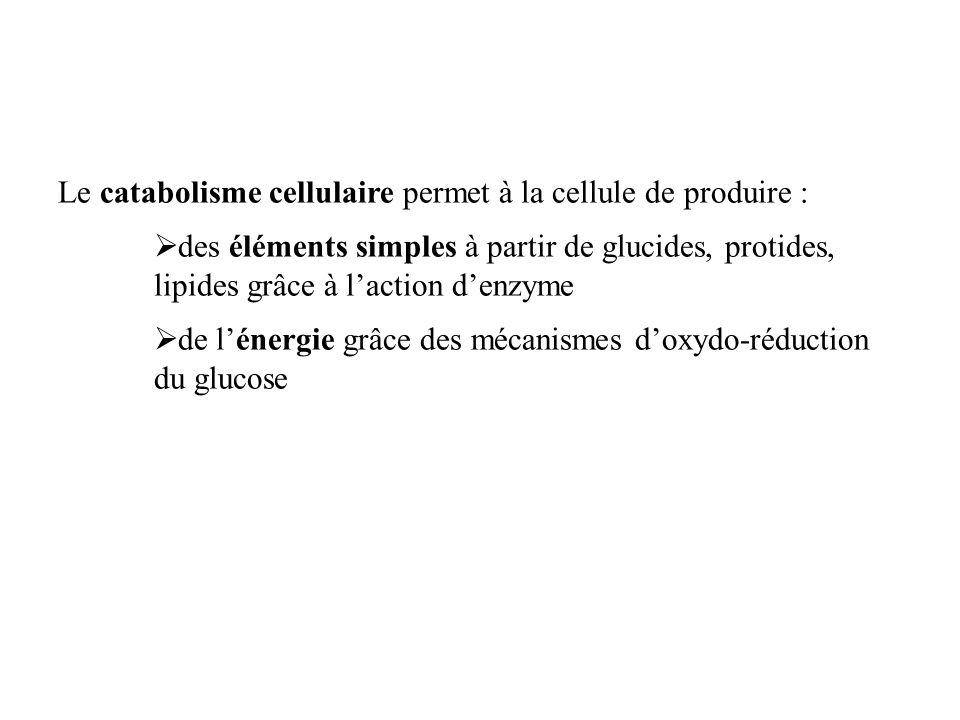 La respiration cellulaire : exemple du glucose