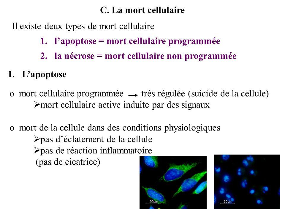 Les fonctions cellulaires Introduction A.La nutrition 1.échanges sans mouvements de membrane a.transport passif i.la diffusion ii.losmose b.transport