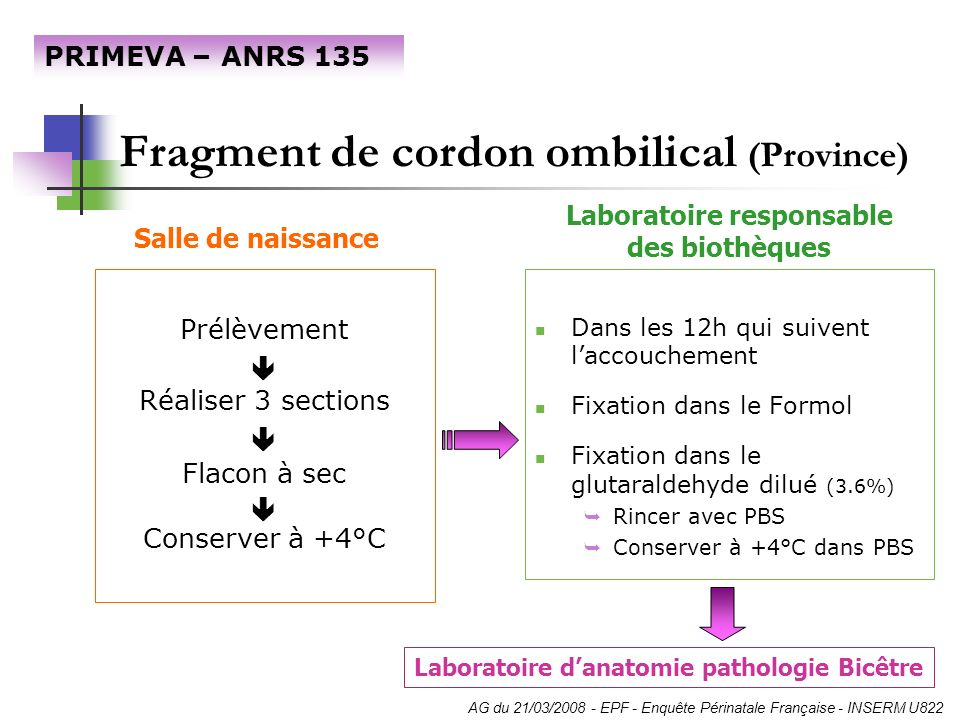 Fragment de cordon ombilical (Province) Prélèvement Réaliser 3 sections Flacon à sec Conserver à +4°C Dans les 12h qui suivent laccouchement Fixation