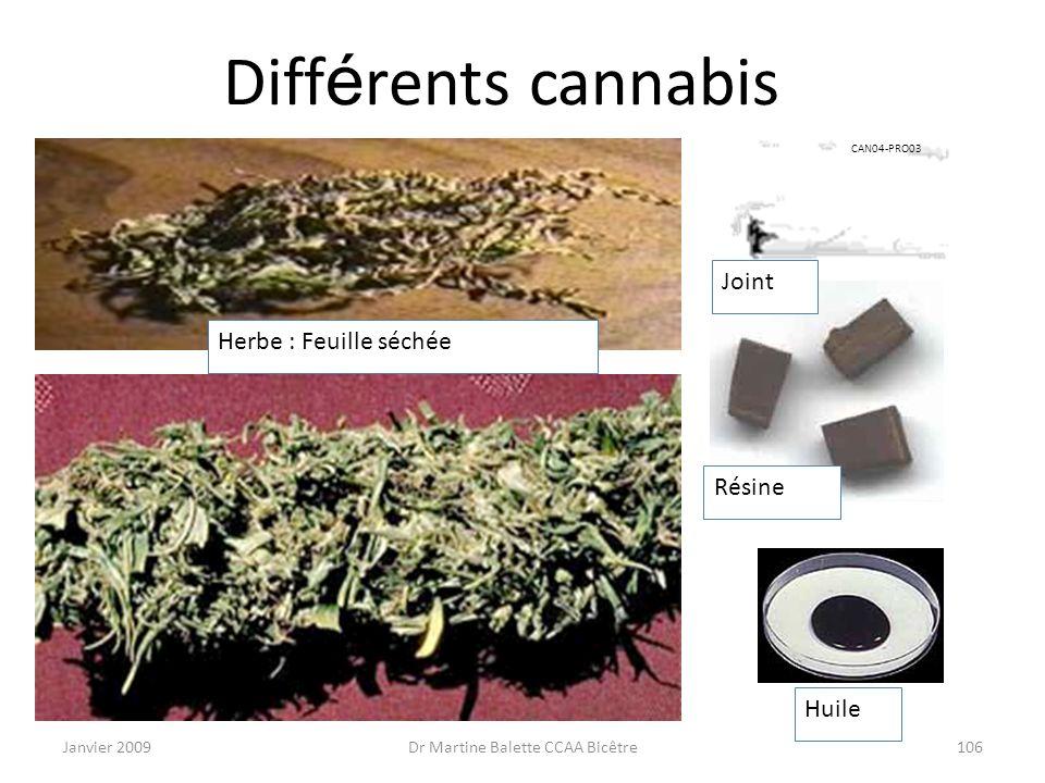 Janvier 2009Dr Martine Balette CCAA Bicêtre106 Diff é rents cannabis Herbe : Feuille séchée Huile Résine Joint CAN04-PRO03