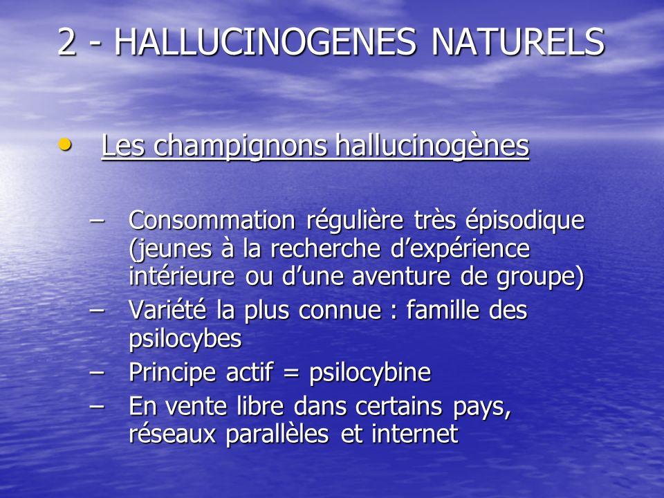 2 - HALLUCINOGENES NATURELS Les champignons hallucinogènes Les champignons hallucinogènes –Consommation régulière très épisodique (jeunes à la recherc