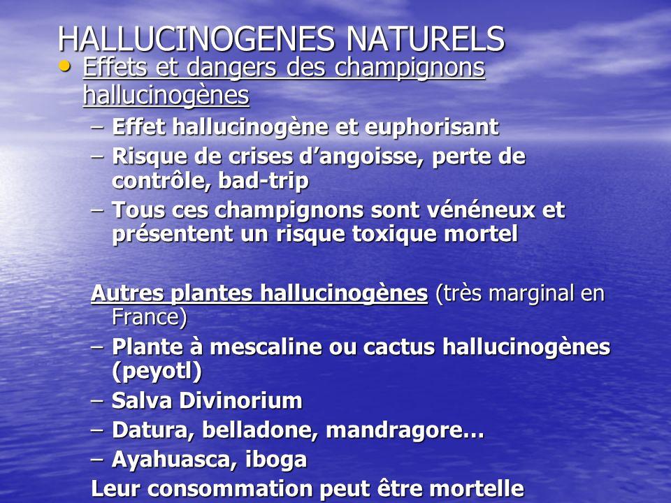 HALLUCINOGENES NATURELS Effets et dangers des champignons hallucinogènes Effets et dangers des champignons hallucinogènes –Effet hallucinogène et euph
