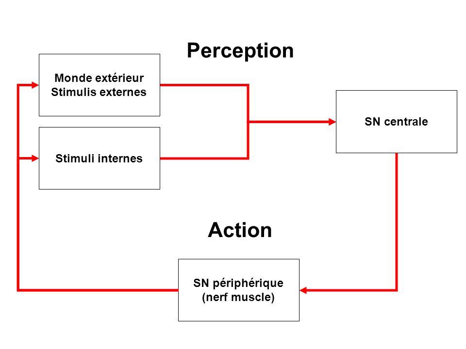 Fonctions spécifiques aux humains (?) langage mémoire (pas spécifique mais très développé chez lHomme) planification: capacité à simuler/anticiper le futur