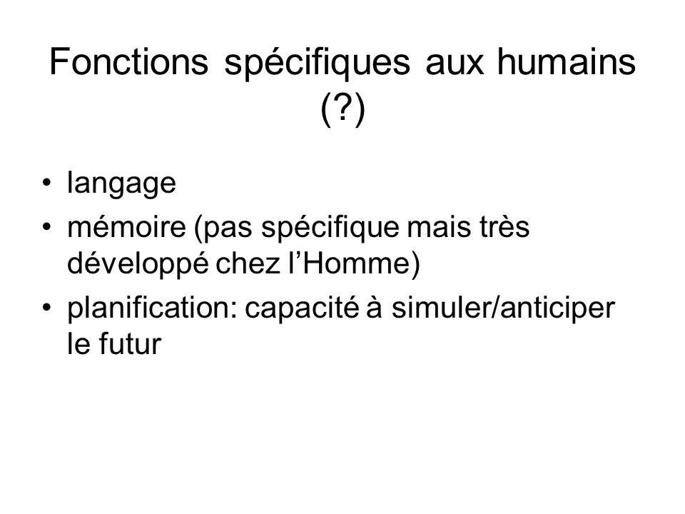 Fonctions spécifiques aux humains (?) langage mémoire (pas spécifique mais très développé chez lHomme) planification: capacité à simuler/anticiper le