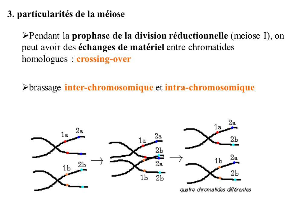 3. particularités de la méiose Pendant la prophase de la division réductionnelle (meiose I), on peut avoir des échanges de matériel entre chromatides