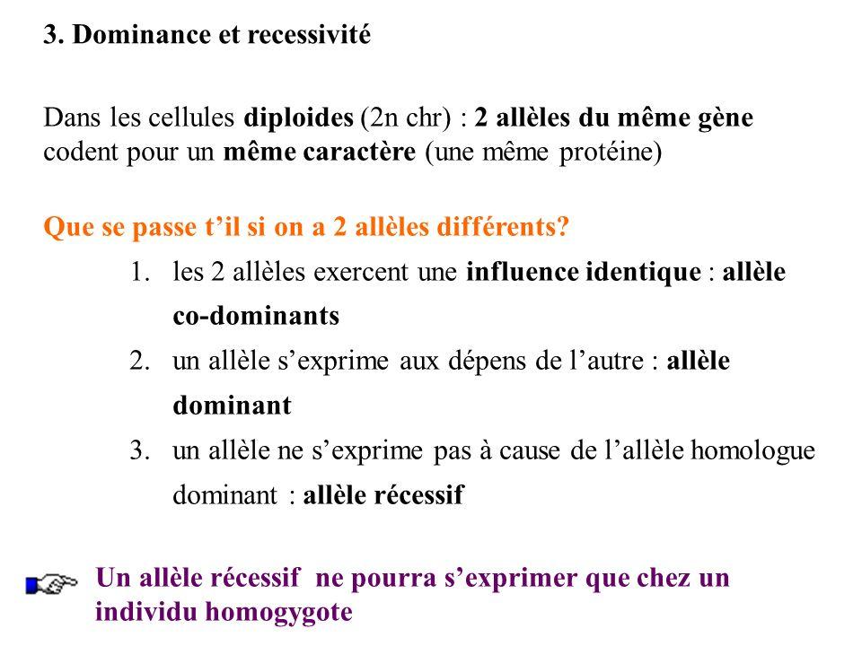 3. Dominance et recessivité Dans les cellules diploides (2n chr) : 2 allèles du même gène codent pour un même caractère (une même protéine) Que se pas