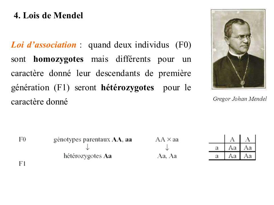 4. Lois de Mendel Gregor Johan Mendel Loi dassociation : quand deux individus (F0) sont homozygotes mais différents pour un caractère donné leur desce