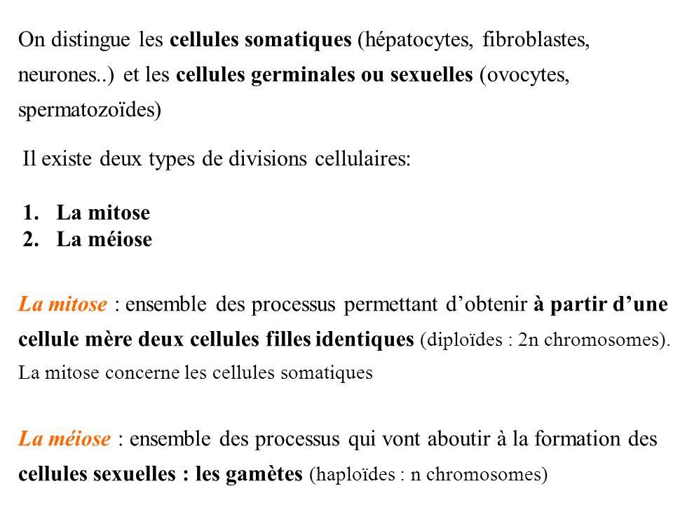 Il existe deux types de divisions cellulaires: 1.La mitose 2.La méiose La mitose : ensemble des processus permettant dobtenir à partir dune cellule mè