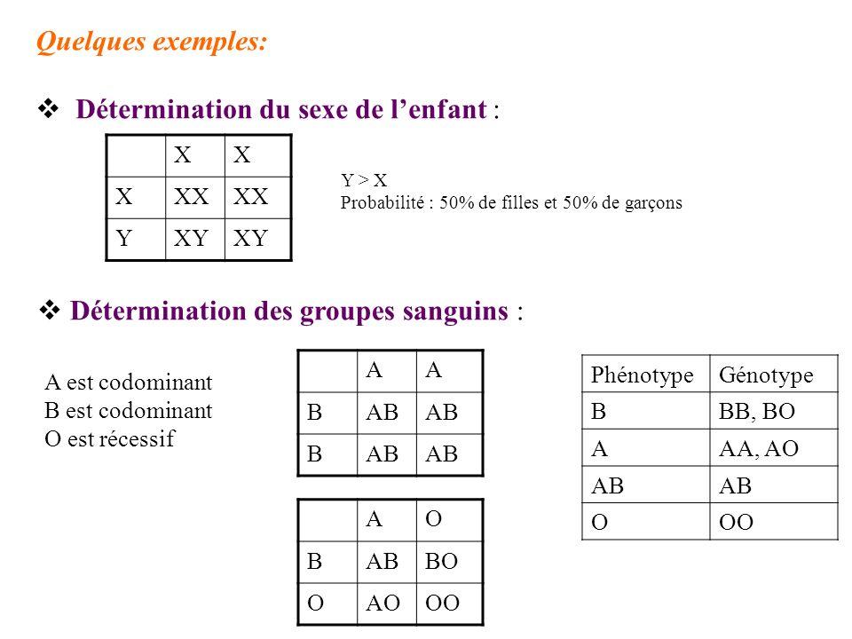Quelques exemples: Détermination du sexe de lenfant : XX XXX YXY Y > X Probabilité : 50% de filles et 50% de garçons Détermination des groupes sanguin