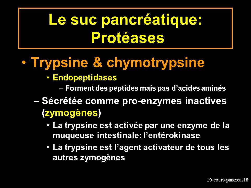 10-cours-pancreas18 Le suc pancréatique: Protéases Trypsine & chymotrypsine Endopeptidases –Forment des peptides mais pas dacides aminés –Sécrétée com