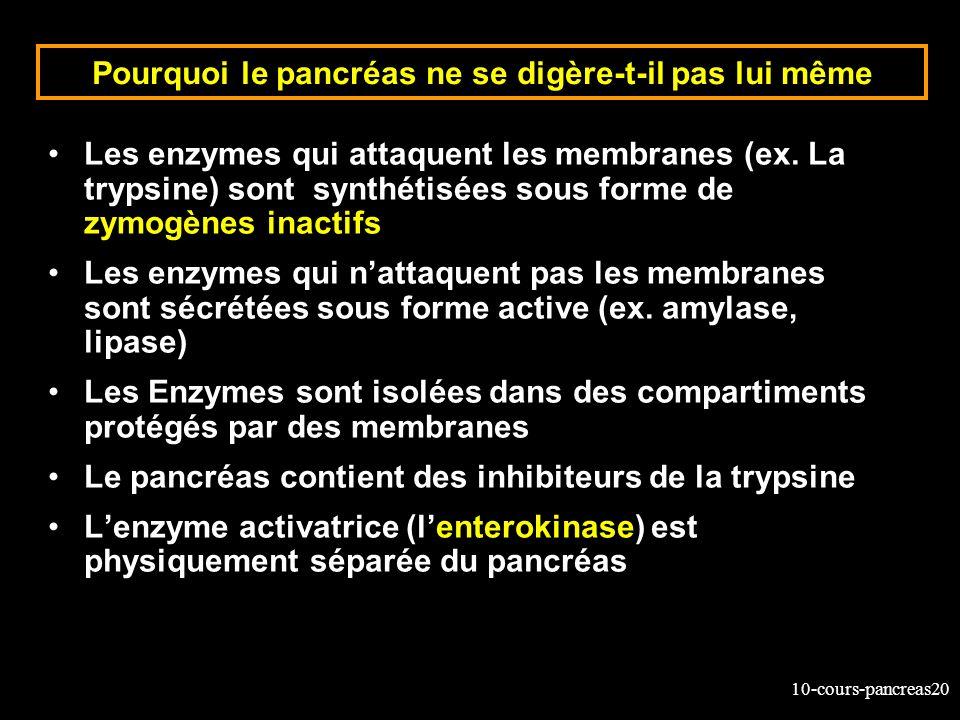 10-cours-pancreas20 Pourquoi le pancréas ne se digère-t-il pas lui même Les enzymes qui attaquent les membranes (ex. La trypsine) sont synthétisées so