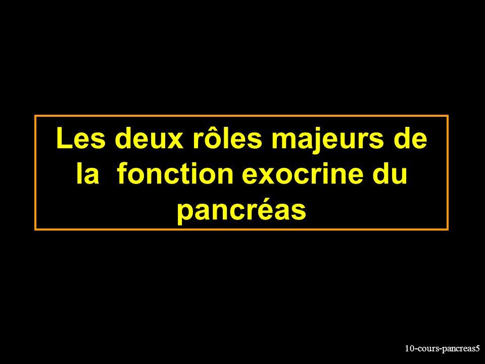 10-cours-pancreas5 Les deux rôles majeurs de la fonction exocrine du pancréas