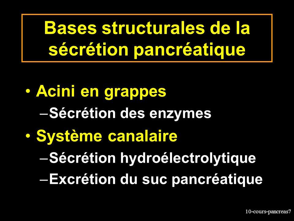 10-cours-pancreas7 Bases structurales de la sécrétion pancréatique Acini en grappes –Sécrétion des enzymes Système canalaire –Sécrétion hydroélectroly