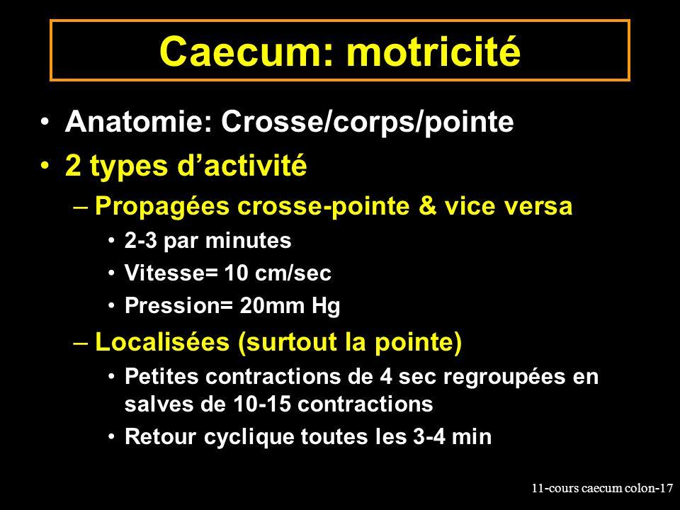 11-cours caecum colon-17 Caecum: motricité Anatomie: Crosse/corps/pointe 2 types dactivité –Propagées crosse-pointe & vice versa 2-3 par minutes Vites