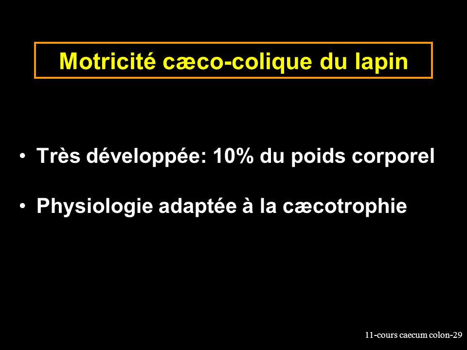 11-cours caecum colon-29 Motricité cæco-colique du lapin Très développée: 10% du poids corporel Physiologie adaptée à la cæcotrophie