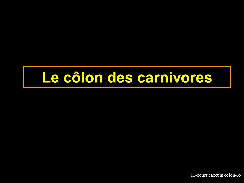 11-cours caecum colon-39 Le côlon des carnivores