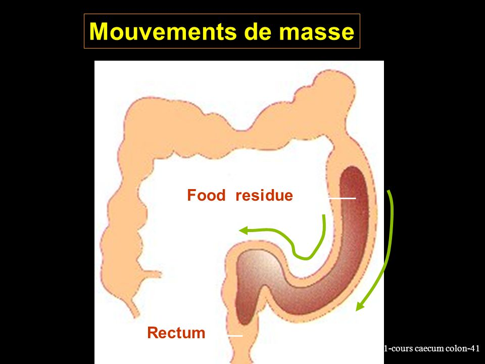 11-cours caecum colon-41 Mouvements de masse Food residue Rectum