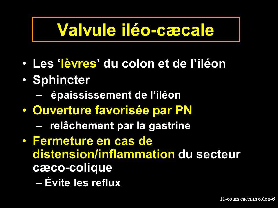 11-cours caecum colon-7 Anatomie de lintestin du cheval 1.Estomac 2.intestin grêle 3.Cæcum: 4.Colon replié 5.Côlon flottant 6.Rectum 1 2 4 5 3 6