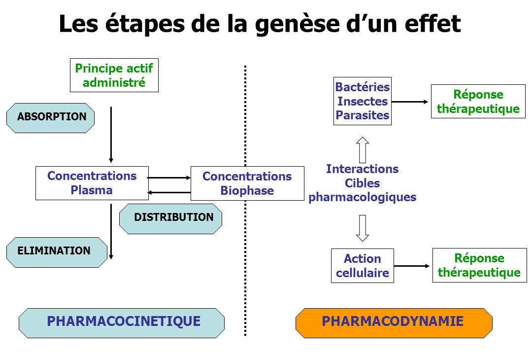 Réponse thérapeutique Interactions Cibles pharmacologiques ABSORPTION PHARMACODYNAMIE Les étapes de la genèse dun effet ELIMINATIONDISTRIBUTION PHARMA