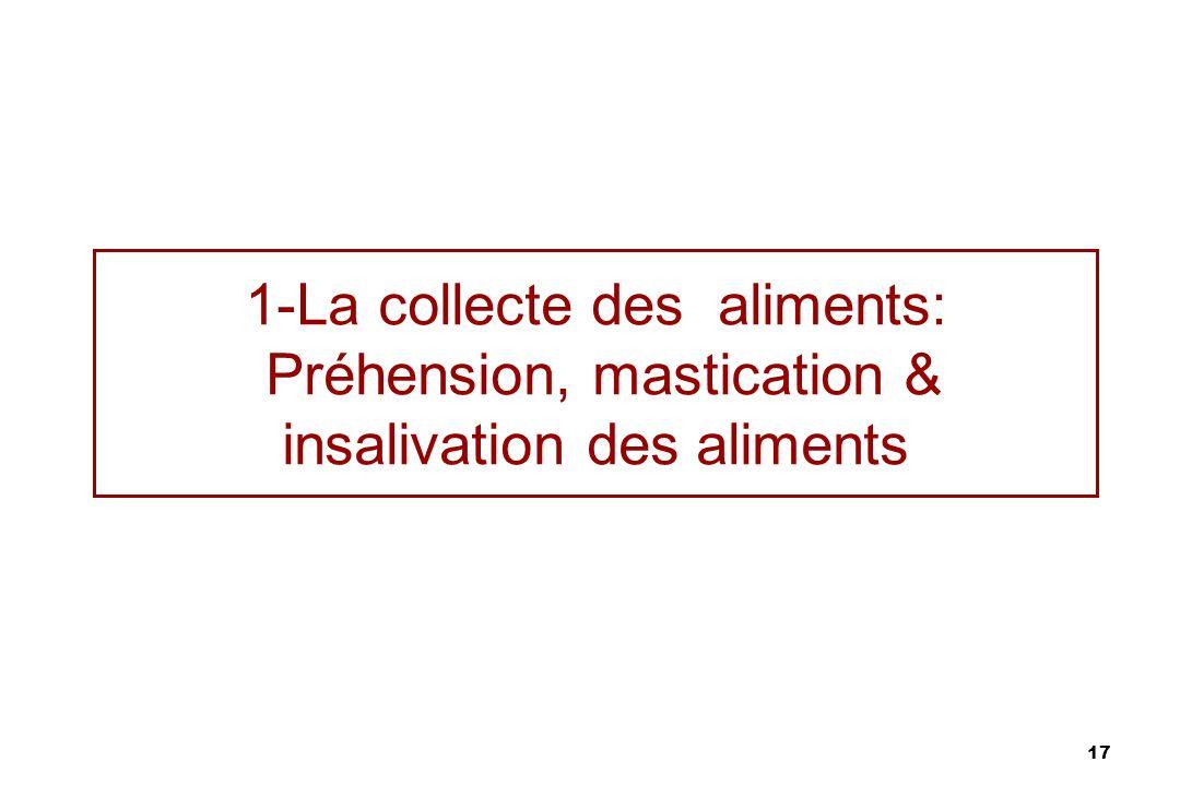 17 1-La collecte des aliments: Préhension, mastication & insalivation des aliments
