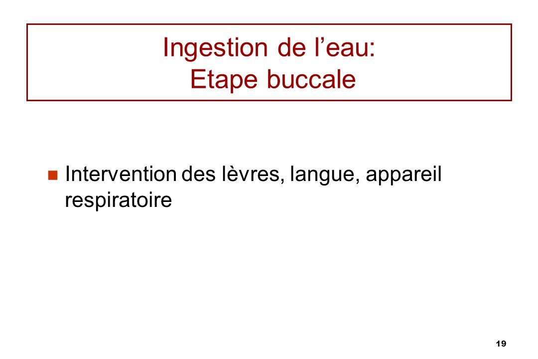 19 Ingestion de leau: Etape buccale Intervention des lèvres, langue, appareil respiratoire