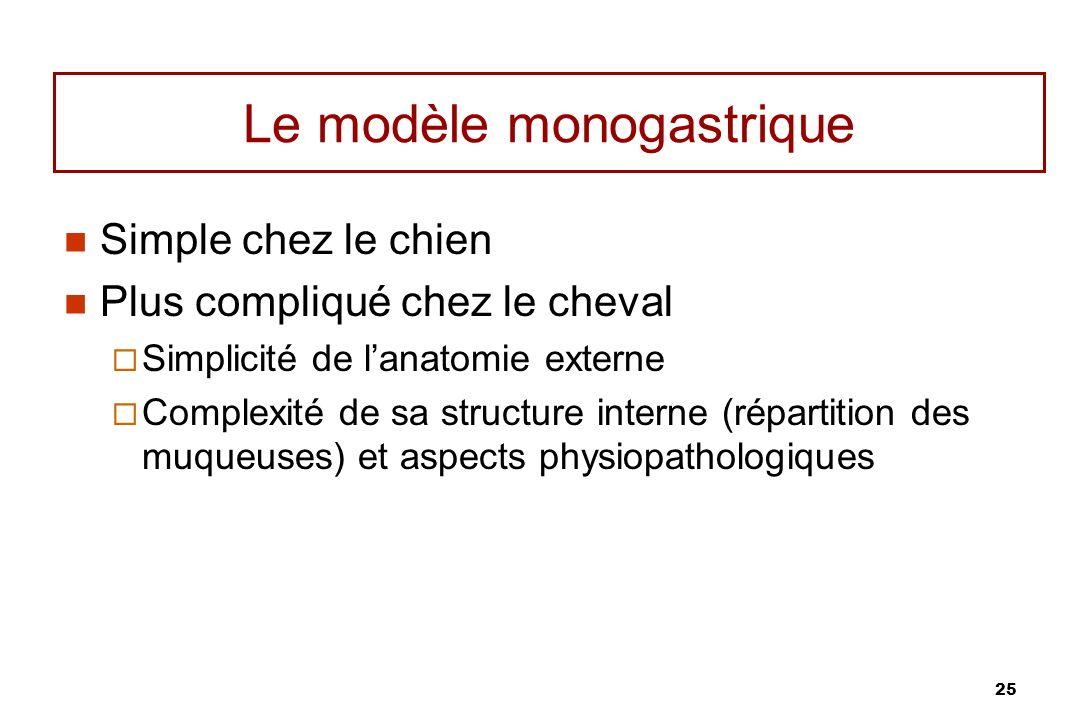 25 Le modèle monogastrique Simple chez le chien Plus compliqué chez le cheval Simplicité de lanatomie externe Complexité de sa structure interne (répa
