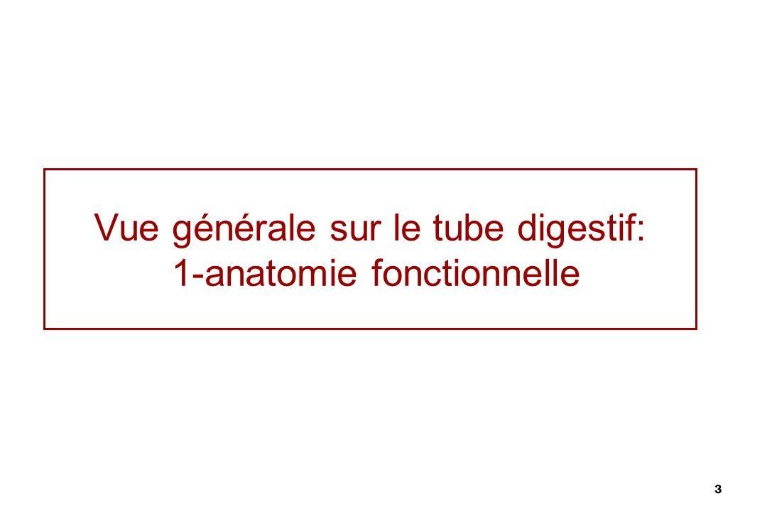 3 Vue générale sur le tube digestif: 1-anatomie fonctionnelle