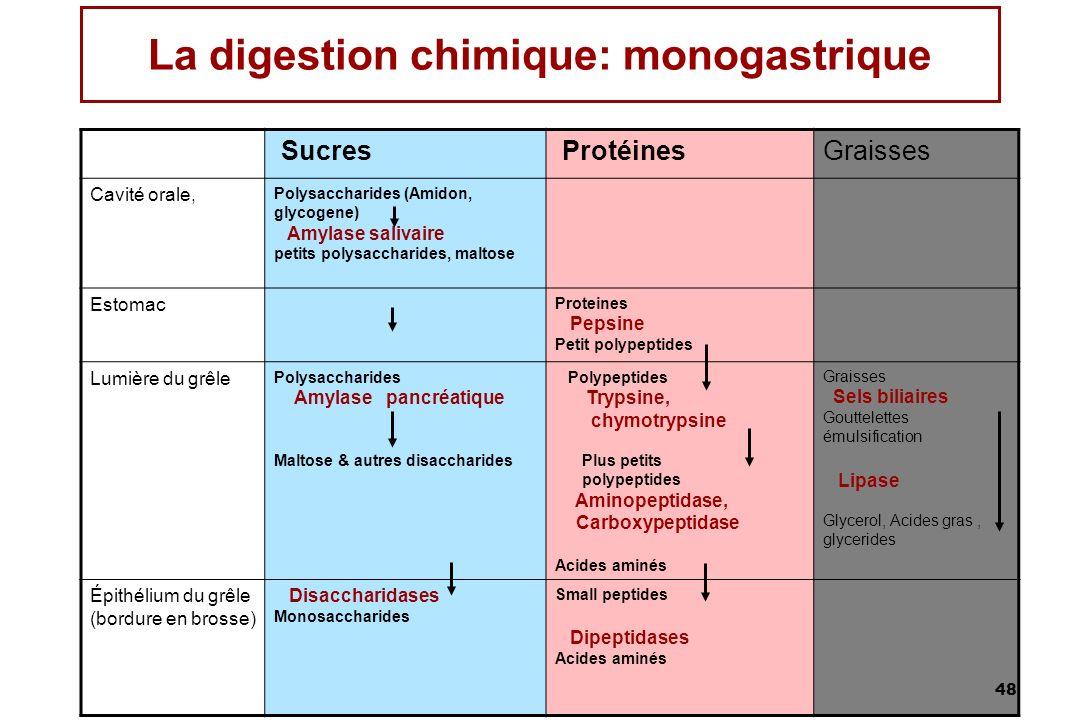 48 La digestion chimique: monogastrique Sucres Protéines Graisses Cavité orale, Polysaccharides (Amidon, glycogene) Amylase salivaire petits polysacch