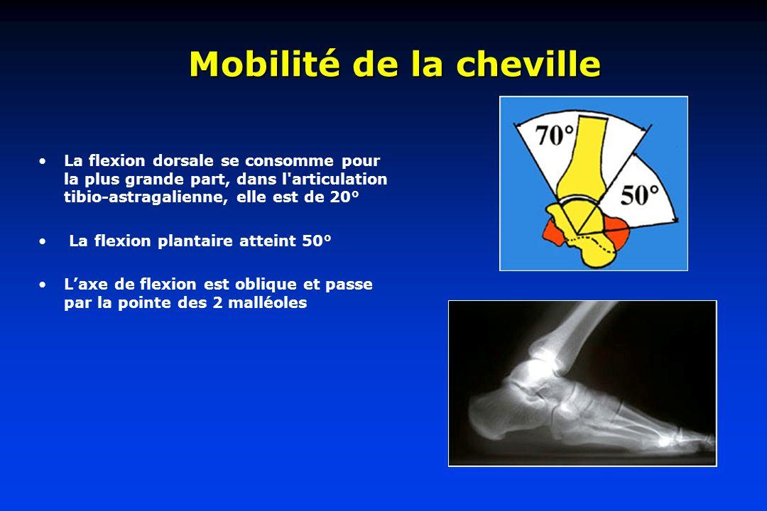 Mobilité de la cheville La flexion dorsale se consomme pour la plus grande part, dans l'articulation tibio-astragalienne, elle est de 20° La flexion p