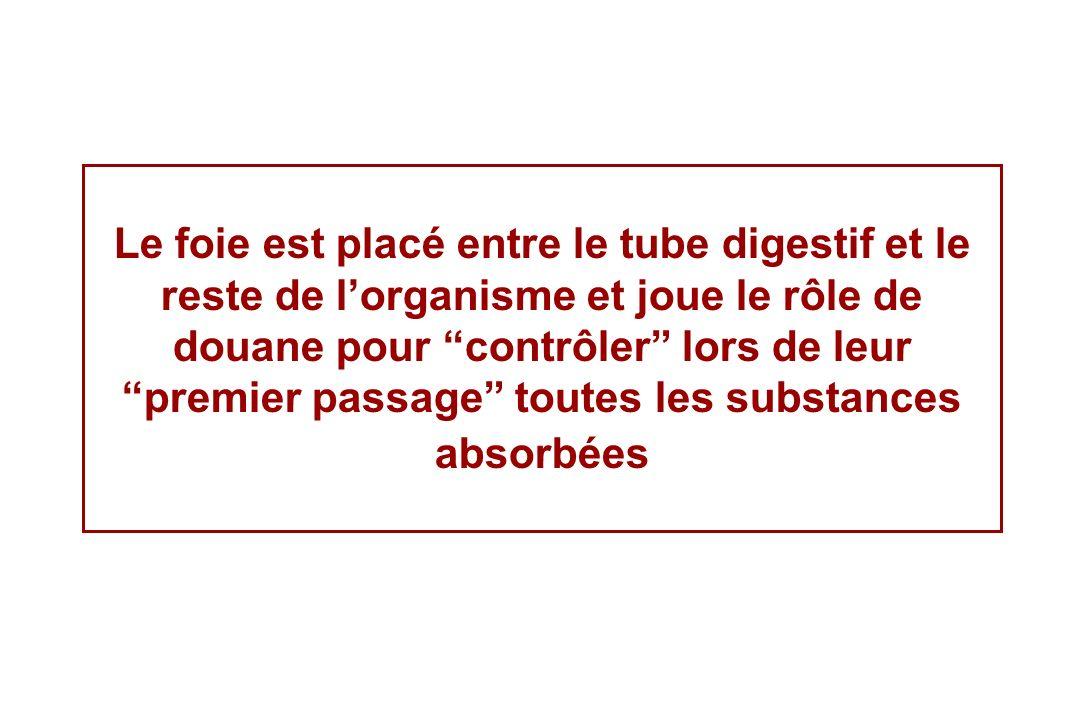 Le système porte du foie Irrigation du tube digestif Veine porte