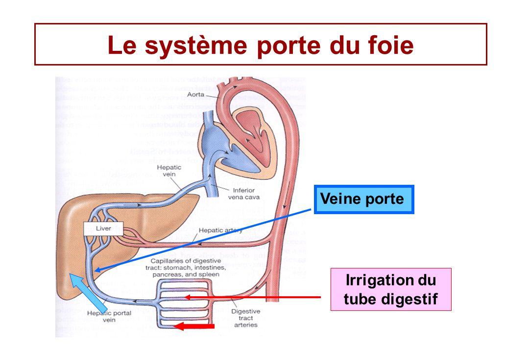 Cycle entéro-hépatique des acides biliaires Les acides biliaires sont absorbés par le sang puis retournent vers le foie qui peut à nouveau les excréter.