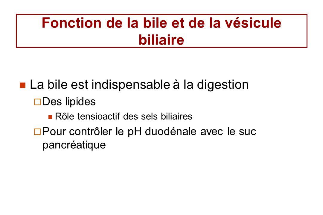 Composition de la bile (%) Eau97.592 Sels biliaires 1.16 Bilirubine0.04 0.3 Cholestérol0.10.3 - 0.9 Lécithine 0.040.3 Bile hépatique Bile vésiculaire