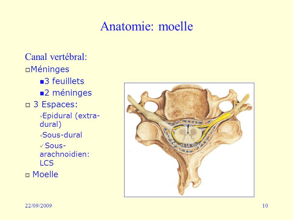 22/09/200910 Anatomie: moelle Canal vertébral: Méninges 3 feuillets 2 méninges 3 Espaces: Epidural (extra- dural) Sous-dural Sous- arachnoidien: LCS M