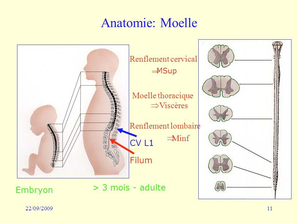 22/09/200911 Anatomie: Moelle Embryon > 3 mois - adulte CV L1 Filum MSup Moelle thoracique Viscères Minf Renflement cervical Renflement lombaire