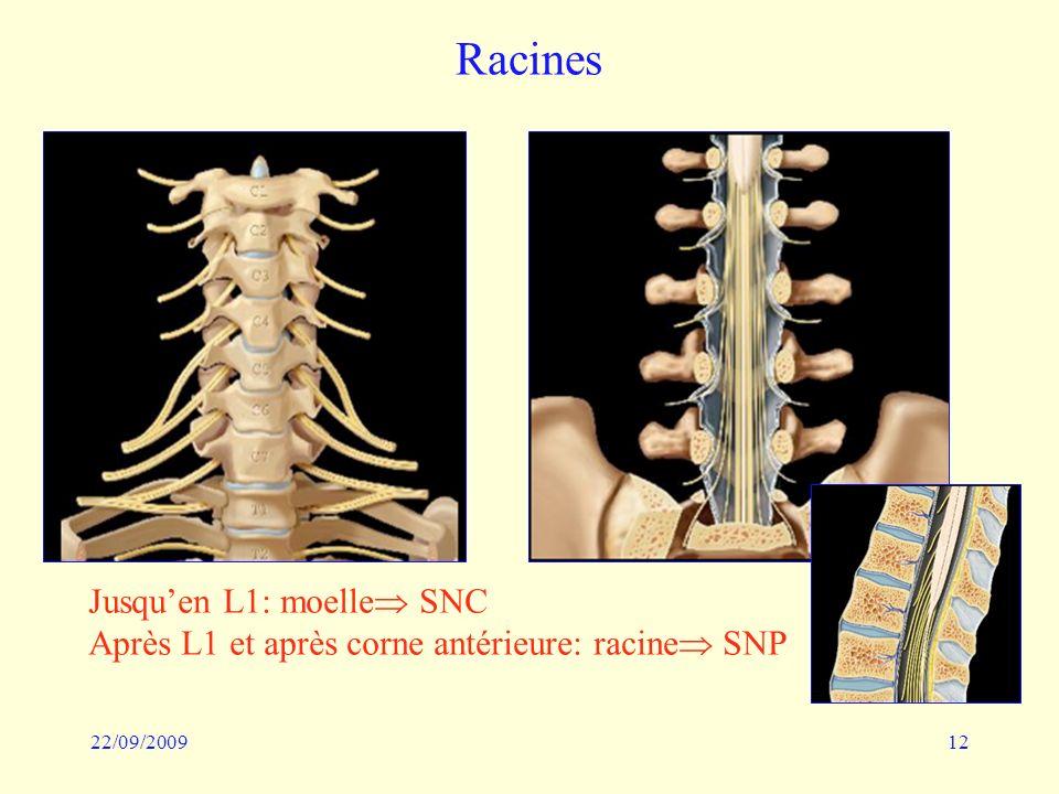 22/09/200912 Racines Jusquen L1: moelle SNC Après L1 et après corne antérieure: racine SNP