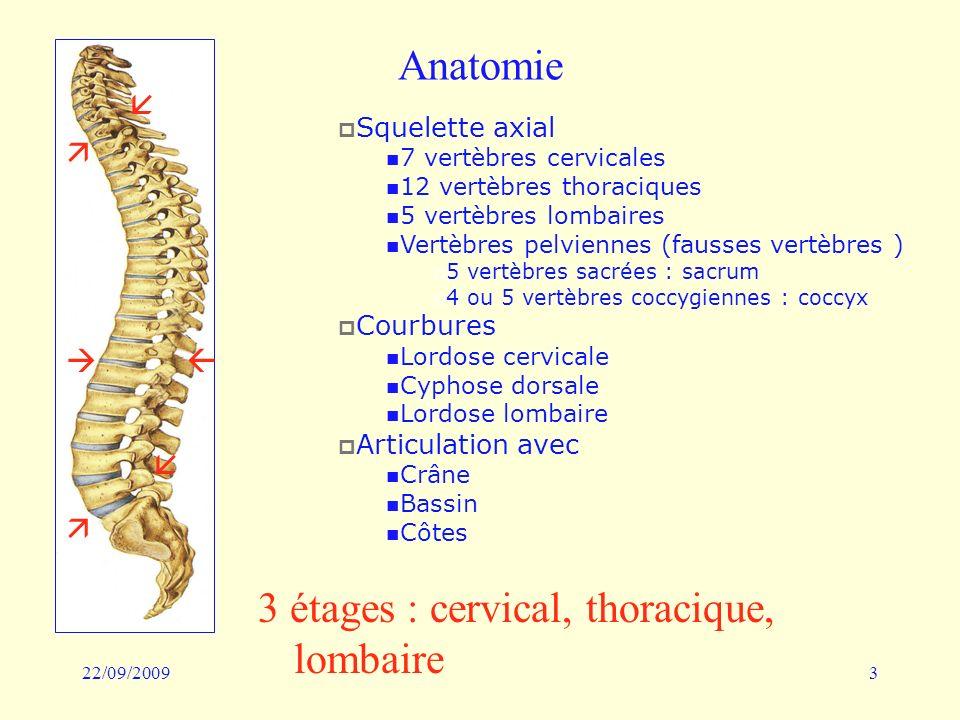 22/09/20093 Anatomie 3 étages : cervical, thoracique, lombaire Squelette axial 7 vertèbres cervicales 12 vertèbres thoraciques 5 vertèbres lombaires V