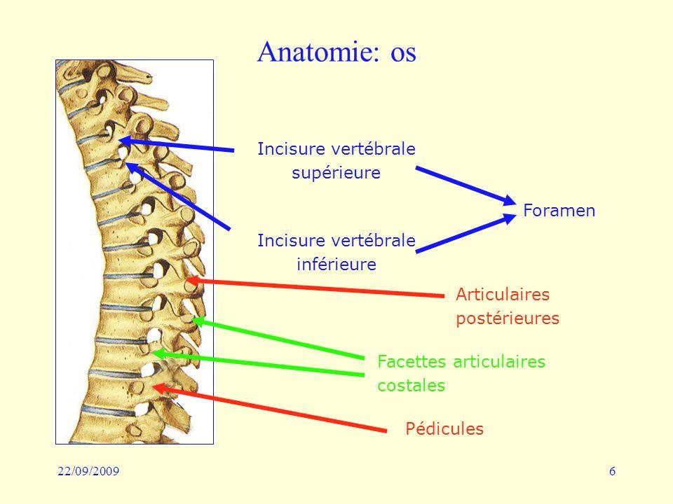 22/09/20096 Anatomie: os Incisure vertébrale supérieure Incisure vertébrale inférieure Foramen Articulaires postérieures Facettes articulaires costale
