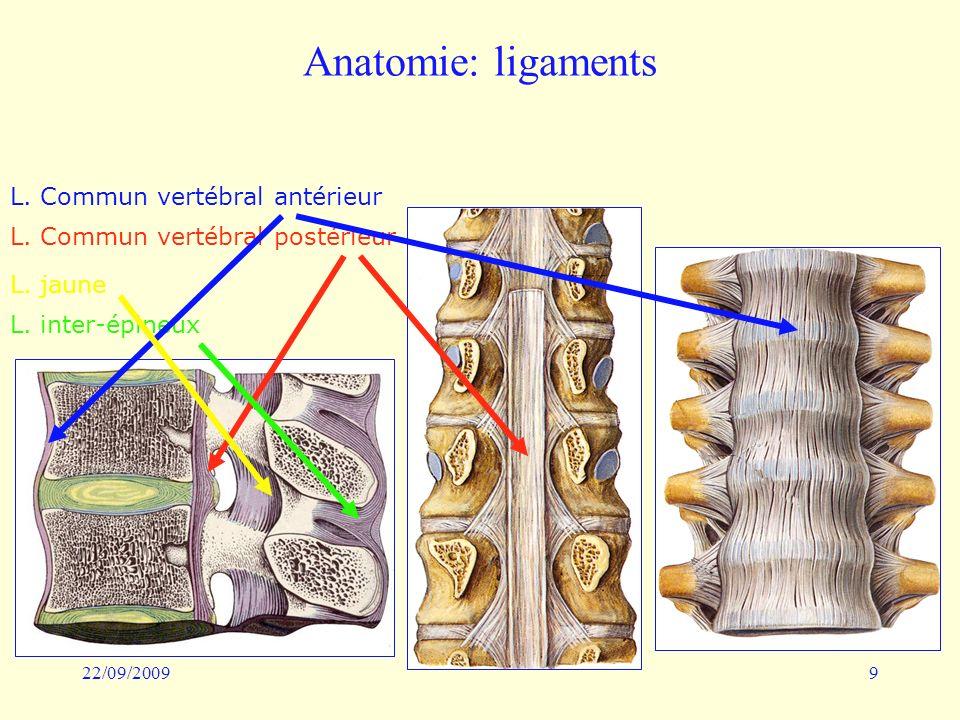 22/09/20099 Anatomie: ligaments L. Commun vertébral antérieur L. Commun vertébral postérieur L. jaune L. inter-épineux