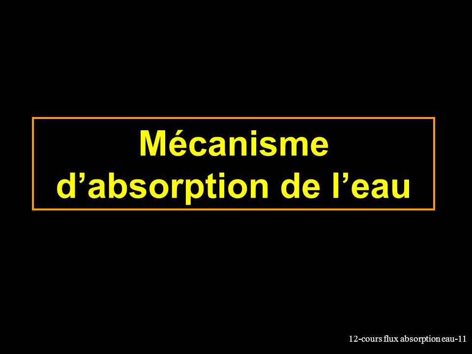 12-cours flux absorption eau-11 Mécanisme dabsorption de leau