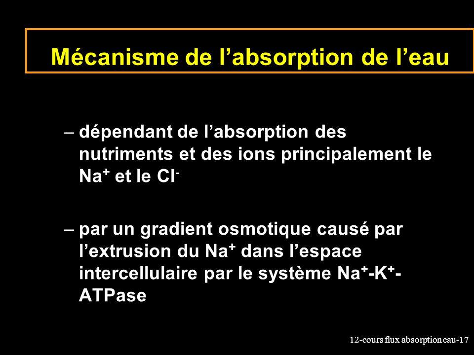 12-cours flux absorption eau-17 Mécanisme de labsorption de leau –dépendant de labsorption des nutriments et des ions principalement le Na + et le Cl