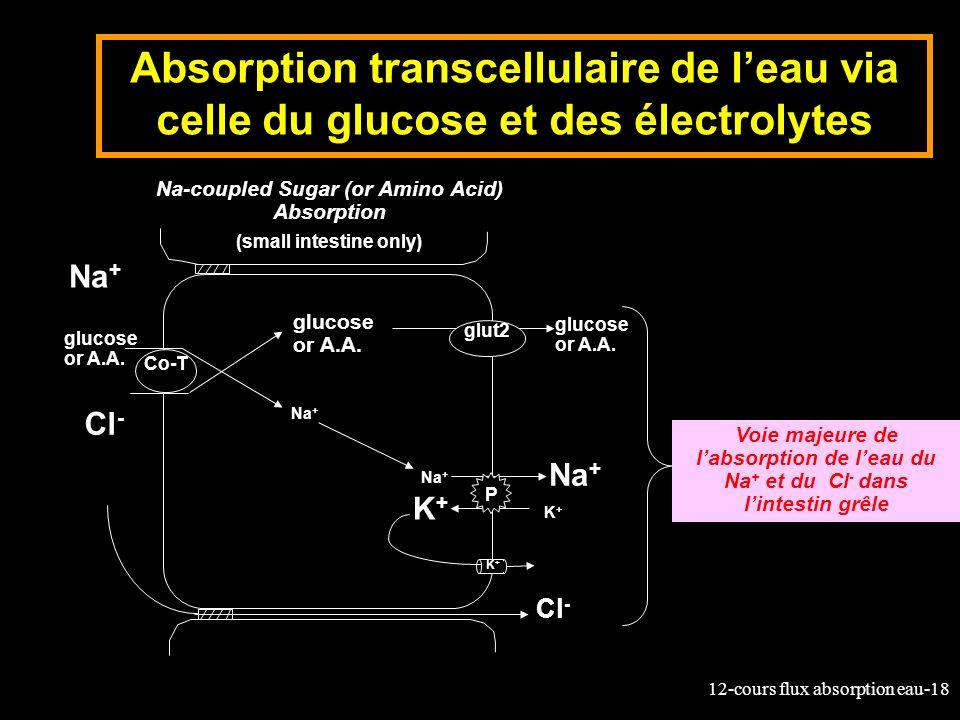 12-cours flux absorption eau-18 Absorption transcellulaire de leau via celle du glucose et des électrolytes glucose or A.A. K+K+ K+K+ Na + K+K+ Na-cou