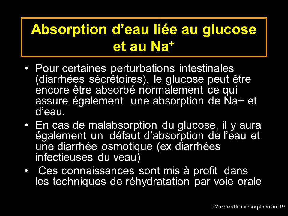 12-cours flux absorption eau-19 Absorption deau liée au glucose et au Na + Pour certaines perturbations intestinales (diarrhées sécrétoires), le gluco
