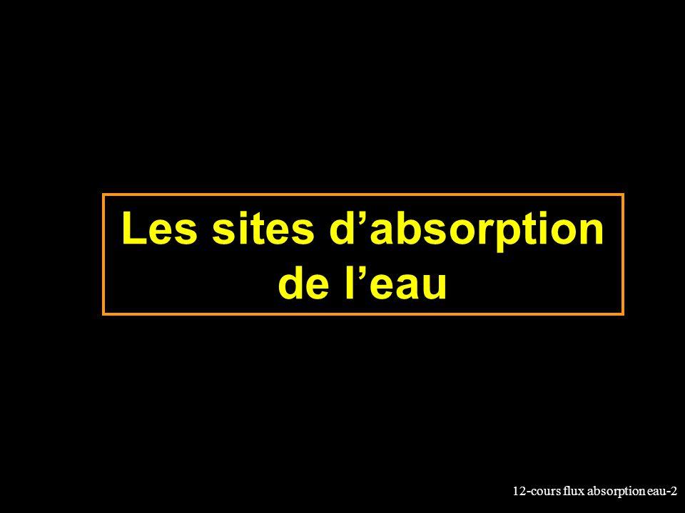 12-cours flux absorption eau-2 Les sites dabsorption de leau