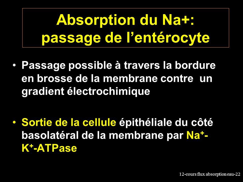 12-cours flux absorption eau-22 Absorption du Na+: passage de lentérocyte Passage possible à travers la bordure en brosse de la membrane contre un gra