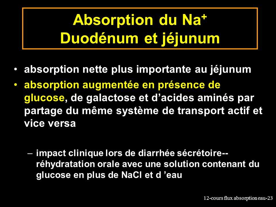 12-cours flux absorption eau-23 Absorption du Na + Duodénum et jéjunum absorption nette plus importante au jéjunum absorption augmentée en présence de