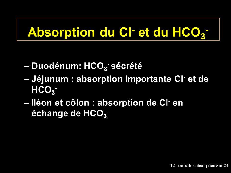 12-cours flux absorption eau-24 Absorption du Cl - et du HCO 3 - –Duodénum: HCO 3 - sécrété –Jéjunum : absorption importante Cl - et de HCO 3 - –Iléon