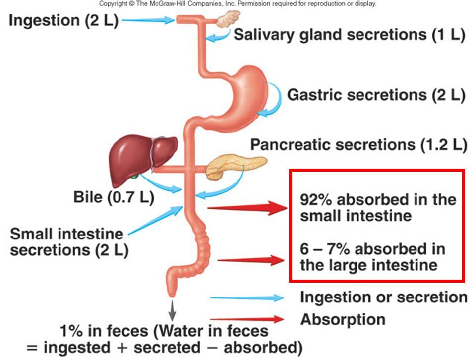 12-cours flux absorption eau-3