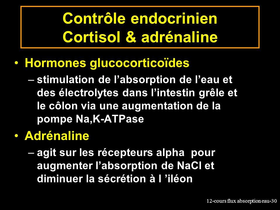 12-cours flux absorption eau-30 Contrôle endocrinien Cortisol & adrénaline Hormones glucocorticoïdes –stimulation de labsorption de leau et des électr